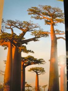 hoosha フーシャン 八雲台 美容  天然ヘナ DO-S  パーマ  カラー   ダメージ トリートメント シャンプー 素髪 島根 松江 フットサル ARES  アレス